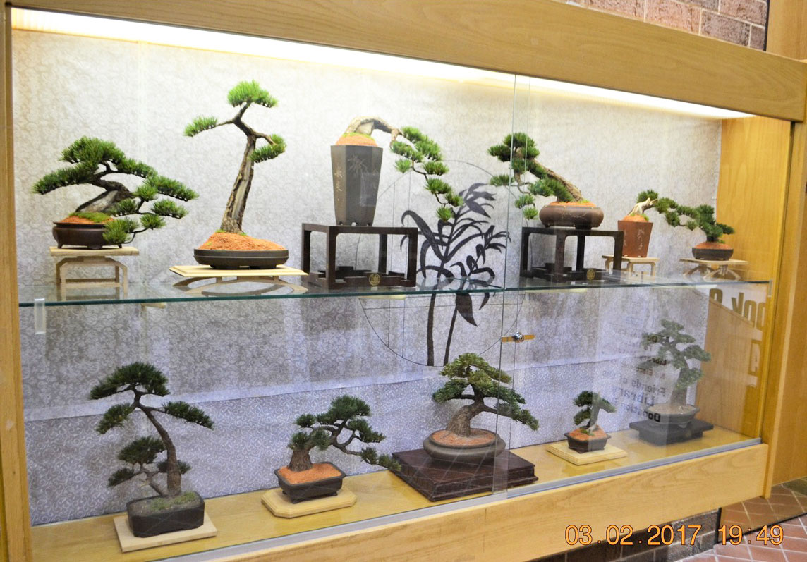 Bonsai Tree Artist Mark Reed